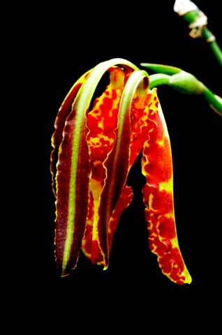 Orchids_091115_023_eds