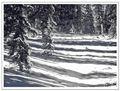 Uinta Shadows on the Snow