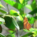 Orangey Butterfly